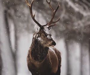 animal, antlers, and deer image