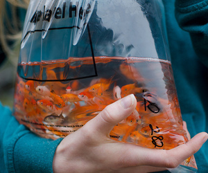 fish, orange, and water image