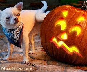 pumpkin carving, funny dog, and funny halloween image