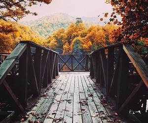 autumn, fall, and nature image