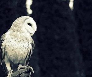 hedwig, harry, and owl image