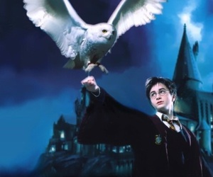 hedwig, owl, and hagrid image