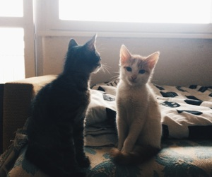 black and white, kittens, and cat image