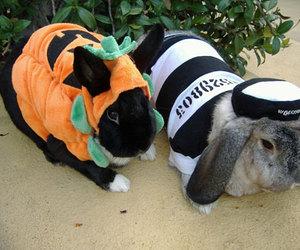 bunny, costumes, and Halloween image