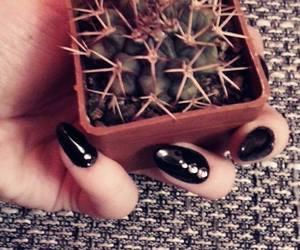 alternative, black, and cactus image