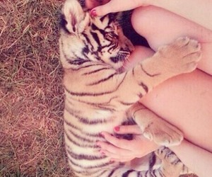 baby, sleep, and tiger image