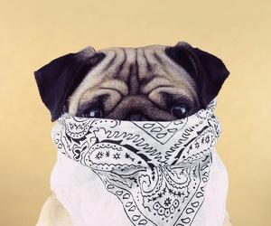 carlin, dog, and gangsta image