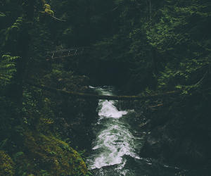 forest, water, and green image