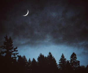night, moon, and forest image