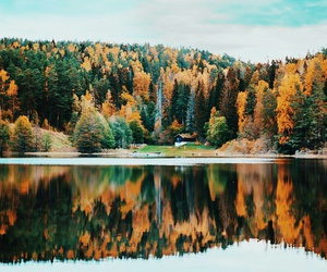 autumn, nature, and pine image