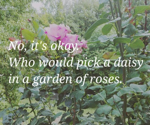 daisy, garden, and quote image