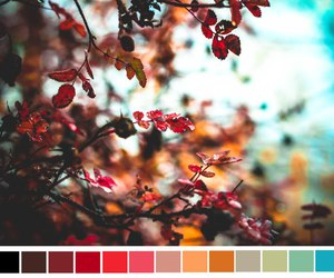 colors, nature, and spring image