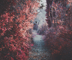 aesthetic, nature, and photography image