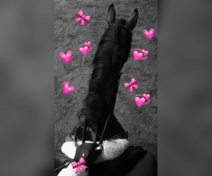 Best, equestrian, and horse image