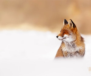 fox and roeselien raimond image
