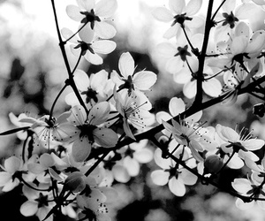b&w, nature, and cute image