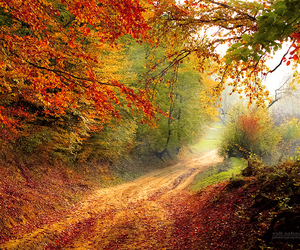 autumn, fall colors, and country image