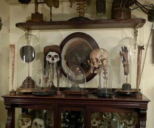 gothic, skeleton, and skulls image
