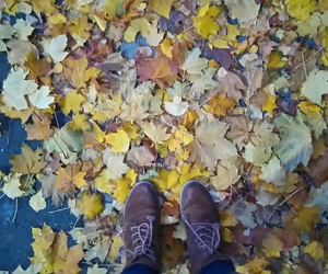 autumn, fallenleaves, and gelb braun image