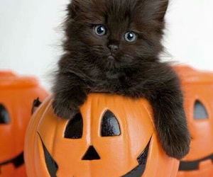 cat, Halloween, and cute image