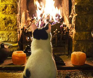 cat and fire image