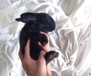 black, rabbit, and animal image
