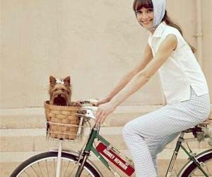audrey hepburn, dog, and bike image