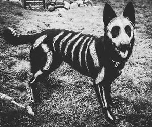 dog, Halloween, and black image