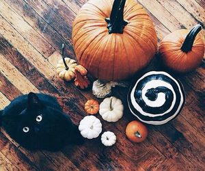 black cat, pumpkins, and ladyboom image