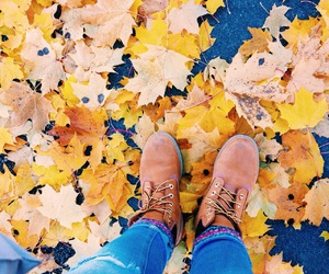 colors, fall, and yellow image