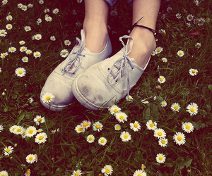flowers, shoes, and daisy image