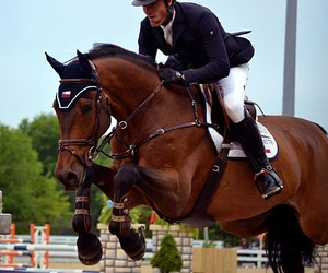 beauty and showjumping image