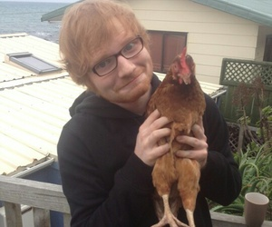 ed sheeran, ed, and Chicken image