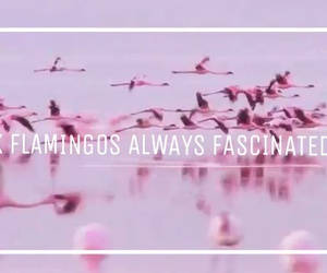 flamingos, girl, and grunge image