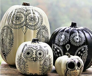 owl and pumpkin image