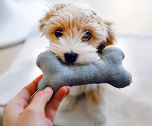 animals, dog, and cute image