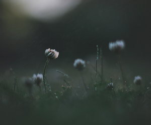 blurred, flowers, and grass image