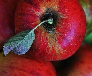 apples, fruit, and autumn image
