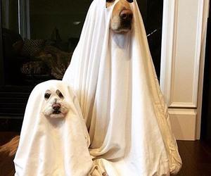 dog, animal, and ghost image