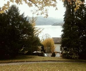 autumn, leaf, and tree image