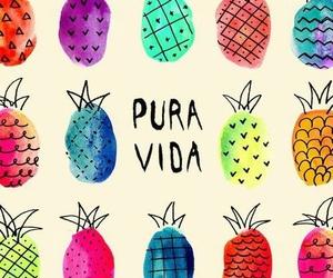 fondo and piña image