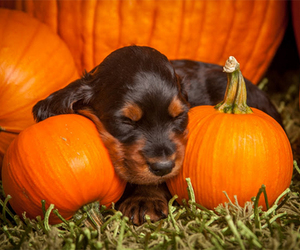 adorable, autumn, and fall image