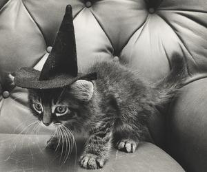 hallowee image