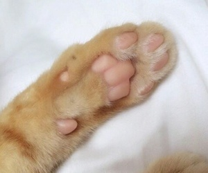 cat, grunge, and paws image