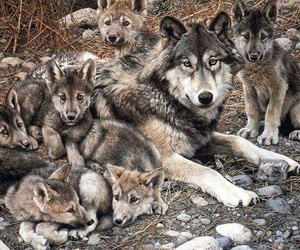 animal, wolf, and tiere image