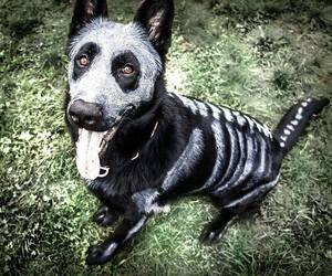 dog, Halloween, and cute image