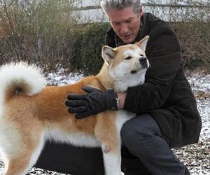 dog and hachiko image