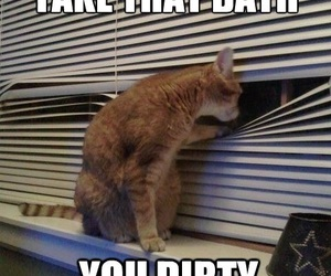 funny images and cat image