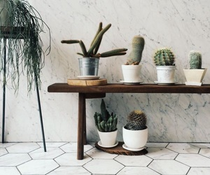 plants, cactus, and indie image