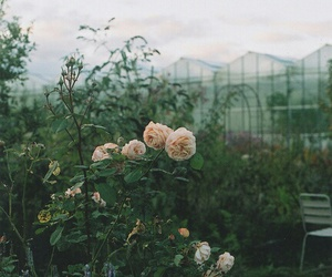 flower, vintage, and nature image